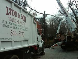 Lyon Tree Service