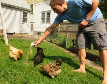 Jacques DuBois feeds his three chickens  in the St. Paul  family's backyard,  photographed on May 27, 2012.  (Pioneer Press: Scott Takushi)